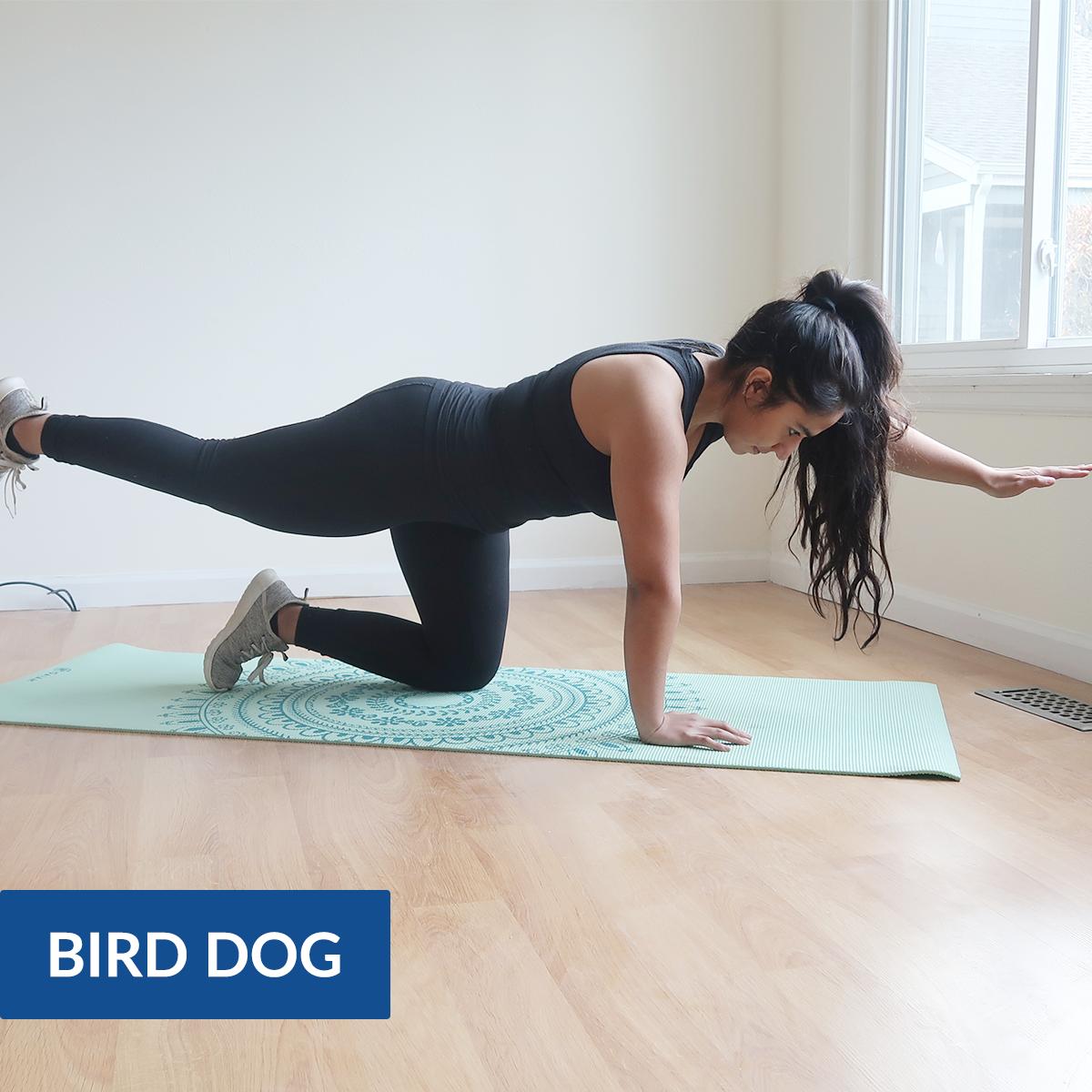 bird dog pose