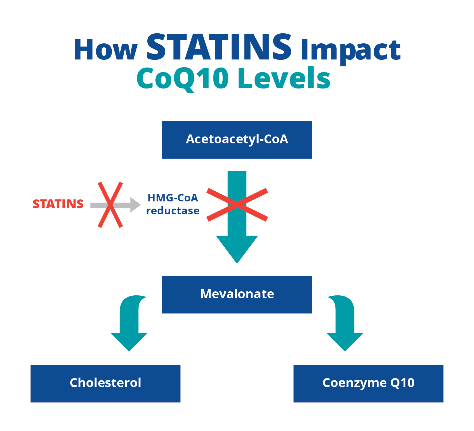 Image result for statin + negative effects