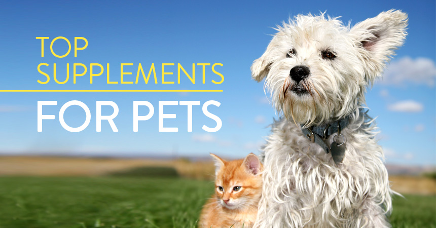 Top Supplements for Fido and Fluffy