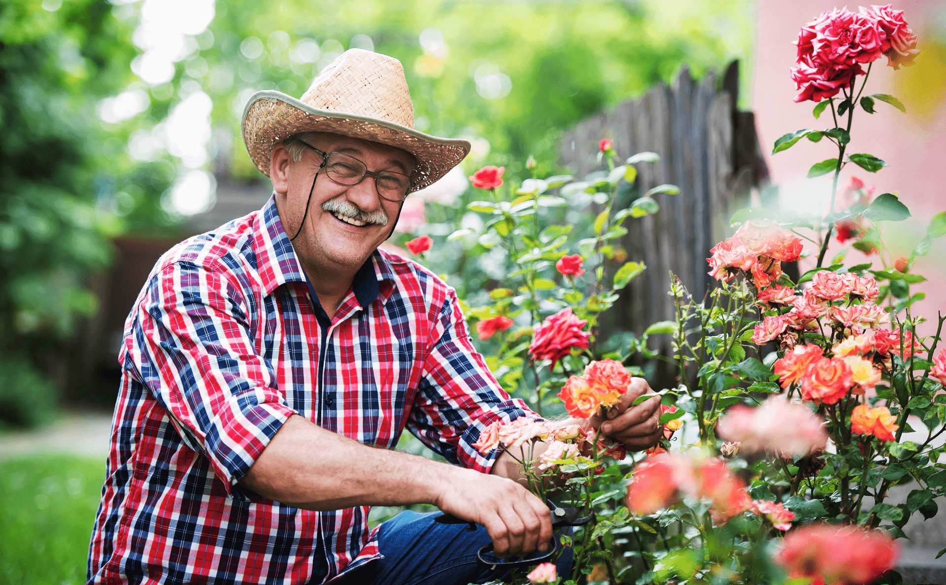Older man smiling and gardening